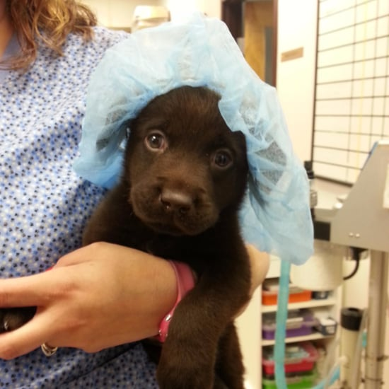 Rescued Puppy With Cleft Palate