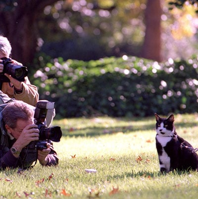 Photos of Socks, First Cat of Former President Bill Clinton (and Chelsea Clinton) Who Died Of Lung Cancer In Betty Currie's Care