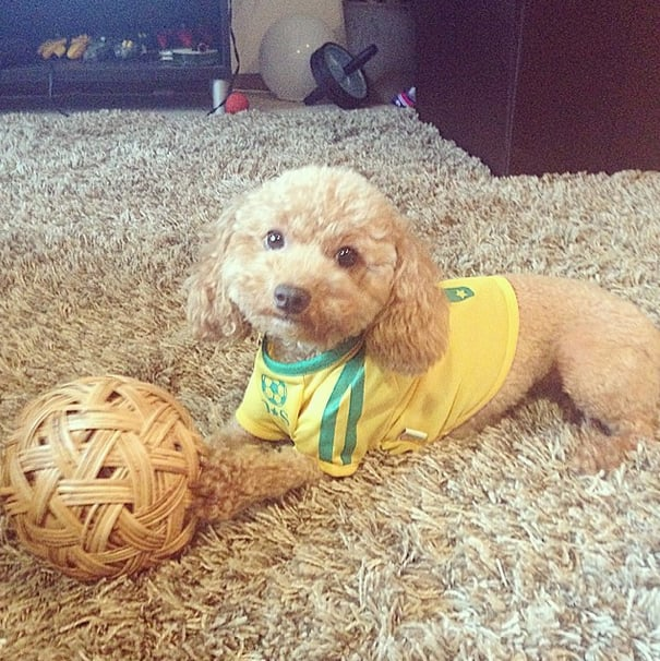 A little yellow and green makes this dog ready to watch Brazil play. Source: Instagram user akemi_fujii