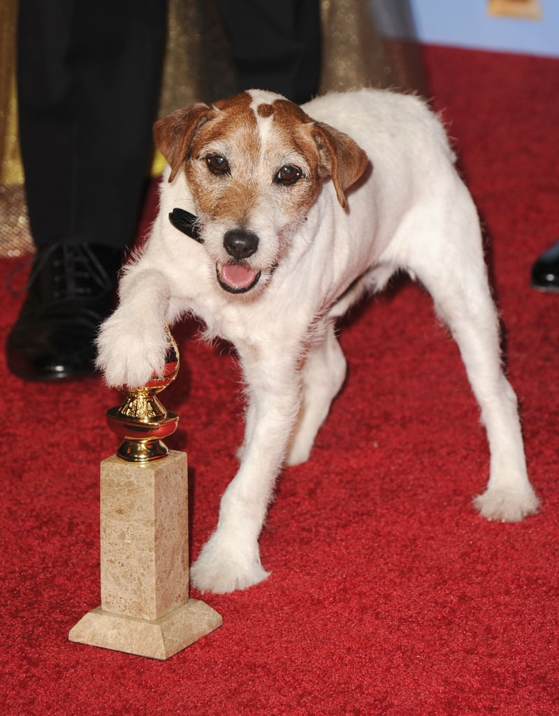Always the center of attention, Uggie poses with his award.