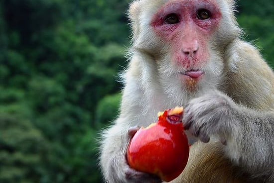 Stop Monkeying Around and Wear Sunscreen