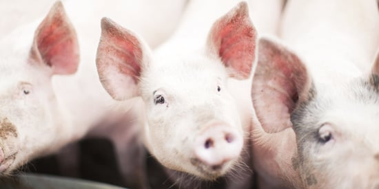 """Animal Protection Groups Discuss Effective Strategies at """"Sentience Conference"""""""