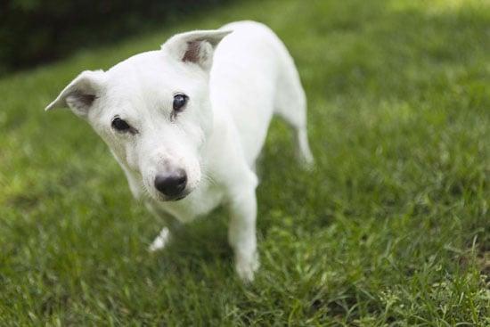 How Dog Breeds Get Named