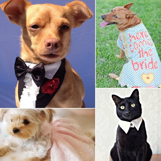 Look Who's Walking Down the Aisle! Wedding Garb For Pets