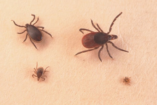 Tips For Preventing and Identifying Tick-Borne Illnesses Like Lyme Disease