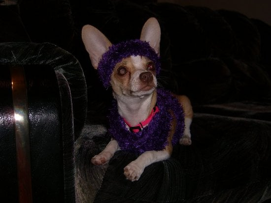 Street Team: Sock-turned-Sweater for a Lil Pooch