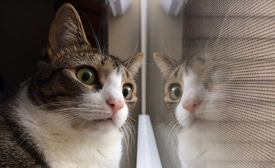 """8 Shows Cats Would Watch Through the """"Cat TV"""" Window"""