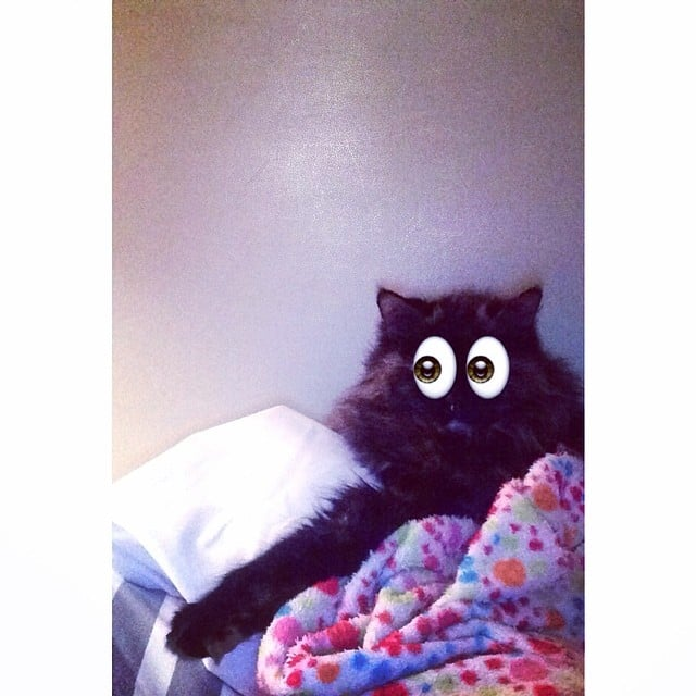 """What?!""  Source: Instagram user kaythecat"