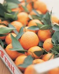 Wake Up and Drink OJ: Vitamin C Fights Stress