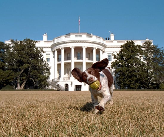 Pet Names and What's the Most Popular Pet Names and Presidential Pet Names