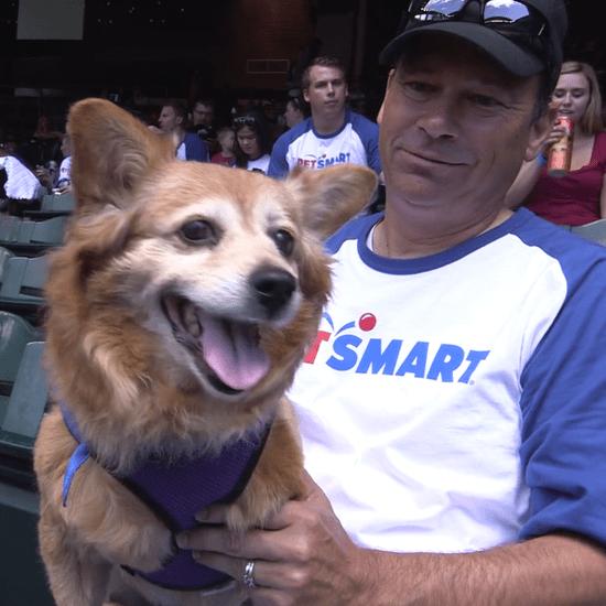 Diamondbacks Attempt World Record For Dogs in Attendance