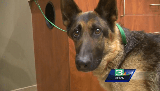 Dog Stranded on California Highway for 5 Weeks Rescued by Police Officer