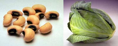 Healthy 2009: Beans and Cabbage