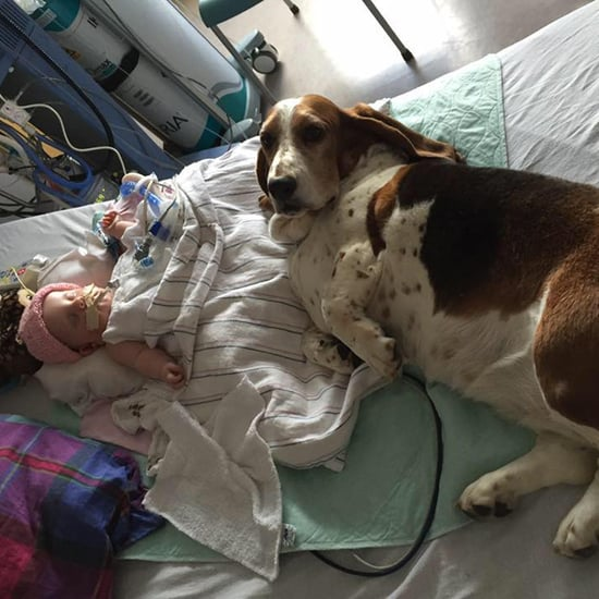 Basset Hounds Stay by Dying Baby's Side
