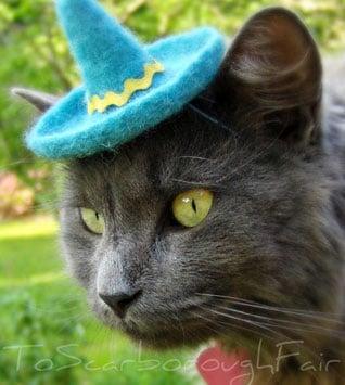 Tu Gato Necesita Un Sombrero