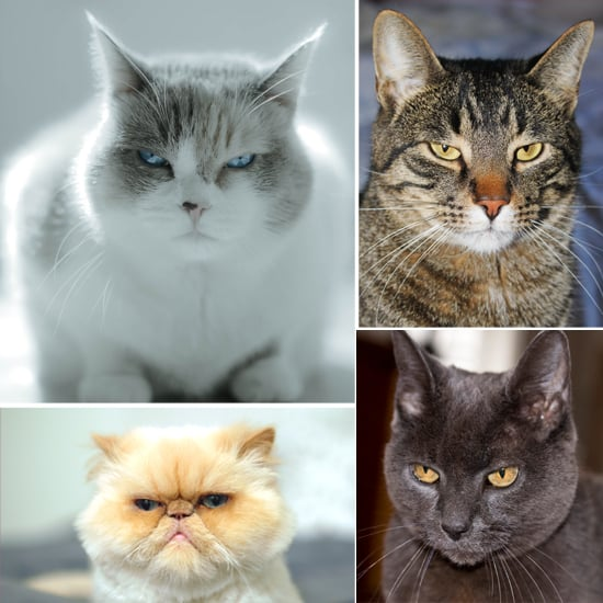 """""""I Disapprove"""": 13 Cats Making Judging-You Faces"""