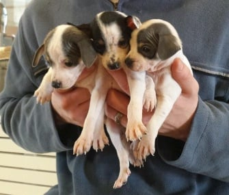 Puppies Found in Bag By a Dog
