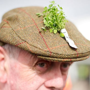 St. Patrick's Day Pictures From Cheltham