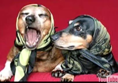The Dachshund Song