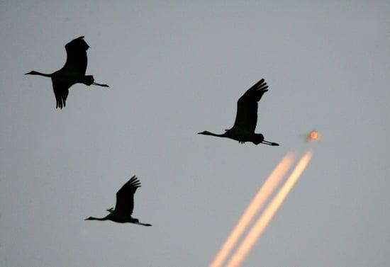 Airplane Fallout: Effort to Pass Bird-Killing Legislation