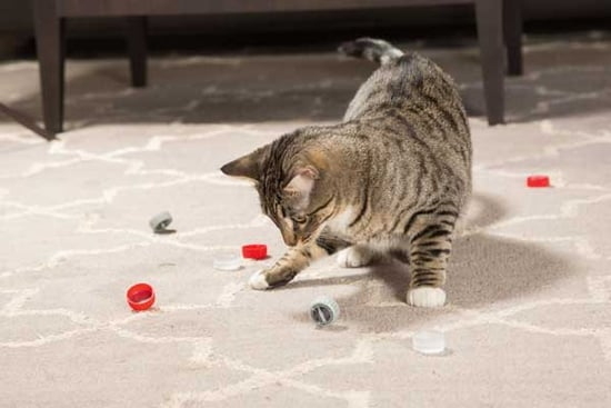 """Ooh, It's a Box!"" Why Cats Will Play With Just About Anything"