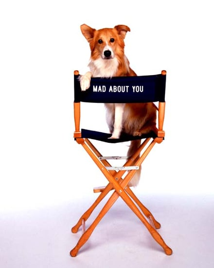 Reader's Choice Recap: Your Fave Small Screen Animal Stars