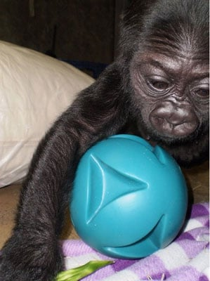 Registry Alert! Hasani Has a Ball . . . But Needs More