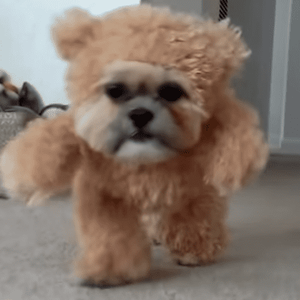 Dog Dressed as a Teddy Bear On a Treadmill Is The Best Thing You'll See Today
