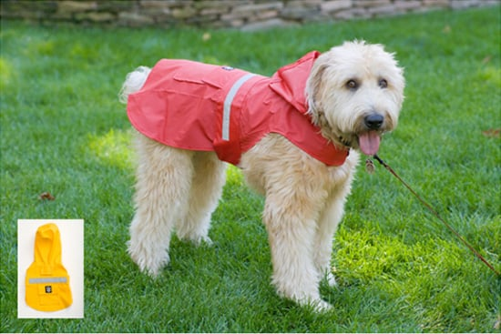 Come PetMarking With Me: April Showers