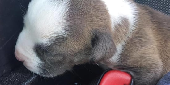 Fed Up Cops Have The Perfect Solution For People Who Leave Dogs In Hot Cars