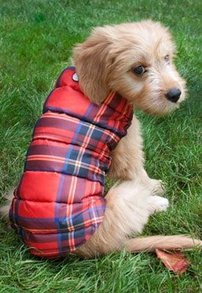 Mascot Plaid Dog Collar and Mascot Plaid Puffer Jacket