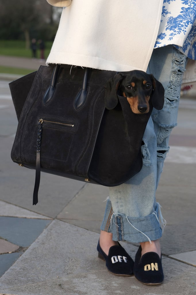 The perfect accessory? An adorable Dachshund sitting prim inside your Céline tote.