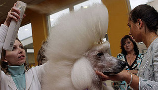 Sugar Shout Out: Groomer Has It!