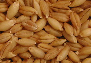 Learn to Love Hulled Barley