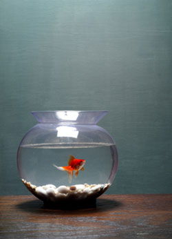 Healthy Spring Cleaning Tips for Your Fish Tank