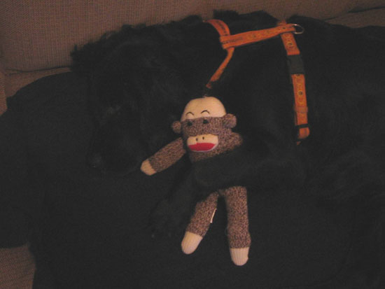 Love Me . . . Love My Sock Monkey