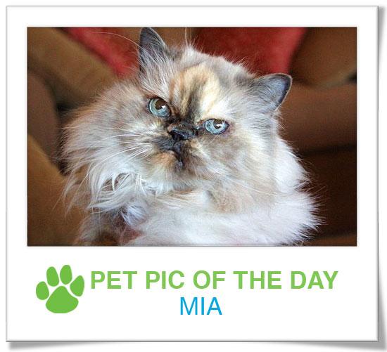 Pet Pics on PetSugar 2009-02-05 09:30:28