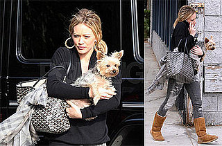 Photos of Hilary Duff With Her Yorkie at the Veterinary Clinic