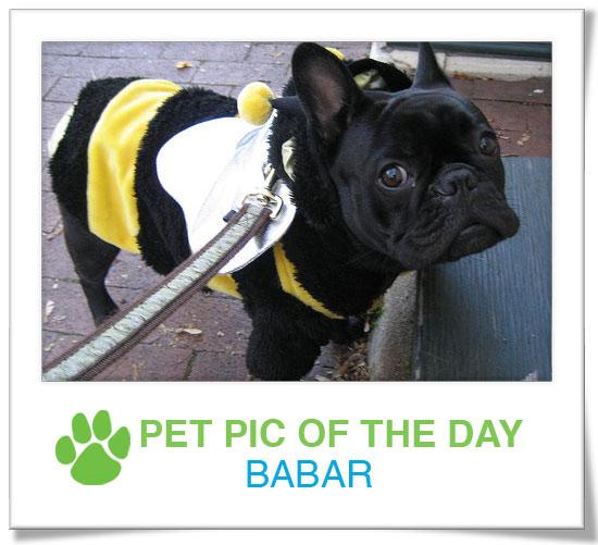 Pet Pics on PetSugar 2008-11-21 09:30:38