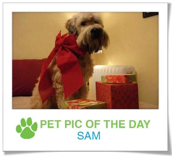 Pet Pics on PetSugar 2008-12-18 09:30:14