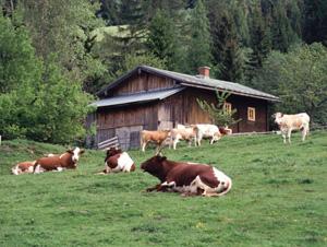 Is Free-Range Meat Healthier?