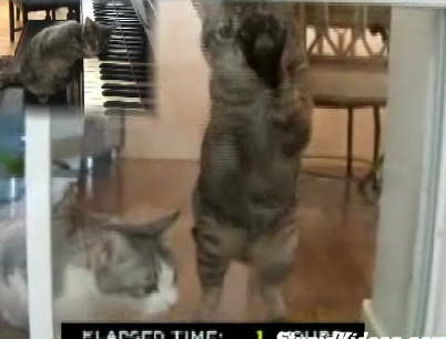 Cats Trapped Inside For 41 Hours
