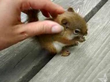 Cute Alert: Baby Squirrel Eating a Nut