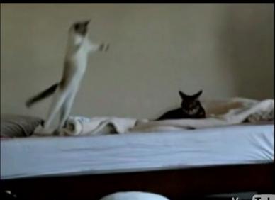 Cat Does a Matrix Leap