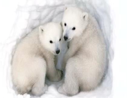 Can We Trust the Polar Bear?