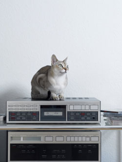 Music Soothing To Pets