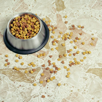 14 New Pet Food Recalls Hit Close to Home