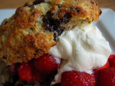 Yummy Link: Strawberry Chocolate Chunk Shortcakes