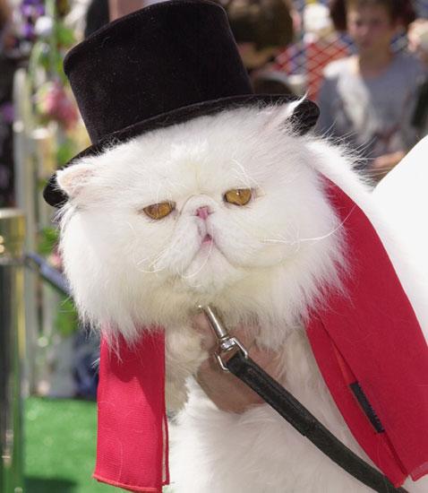Name This Movie Cat!