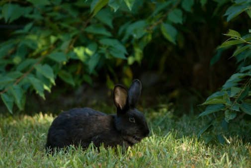 Pet Rabbit Alerts Family to Fire